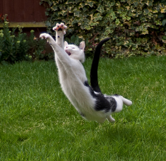 A CAT CAN'T FLY