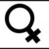 The Feminine Side ofShabbat